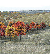 Woodland Scenics 1575 Ready Made Realistic Trees Value Pack - Deciduous Fall Colors
