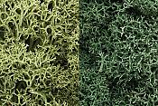 Woodland Scenics 166 Lichen - Natural