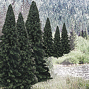 Woodland Scenics 1585 Evergreen Tree Value Pack - Ready Made Trees - Fir